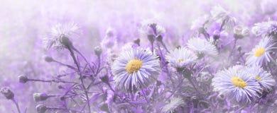 Van de de achtergrond bloemenchrysant van Proton purpere banner moderne des stock afbeeldingen
