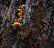 van de achtergrond boomboomstam houten geweven pilze gele kleur Stock Afbeeldingen