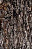 Van de achtergrond boomschors Textuur Stock Foto