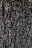 Van de achtergrond boomschors Textuur Echte houten boomschors Het donkere natuurlijke patroon van de boomschors Houten patroon Ec Stock Fotografie