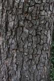 Van de achtergrond boomschors Textuur Echte houten boomschors Het donkere natuurlijke patroon van de boomschors Houten patroon Ec Royalty-vrije Stock Fotografie