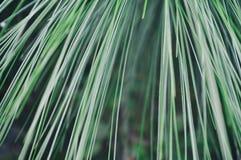 Van de Achtergrond gras abstracte kunst ontwerp gezonde yoga stock afbeelding