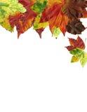 Van de achtergrond herfst Kaart Stock Foto's