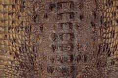 Van de achtergrond krokodilhuid texturen Close-up reptielen Bruinachtige geel van de geschubde leertextuur stock fotografie