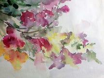 Van de van de achtergrond waterverfkunst tuin van de de taklente de kleurrijke gele rode roze bloembloesem Royalty-vrije Stock Foto