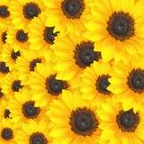 Van de achtergrond zonnebloem patroon Stock Afbeeldingen