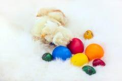 Van de babykip en ester eieren over wit bont stock afbeeldingen
