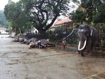 Van de badolifant van Kandy Dalada Maliga Place stock foto