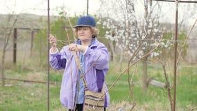 Van de de bandtak van de tuinmanvrouw het fruitboom terwijl het werken in de werf van de de lentetuin stock videobeelden