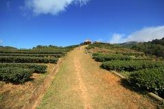 Van de bergchiangmai van Doiangkhang de aardbeigebied van Thailand Royalty-vrije Stock Afbeeldingen