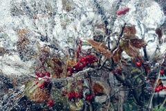 van de bezinningsviburnum van het ijsglas geweven achtergronden van de de bessenhemel de rode in openlucht Royalty-vrije Stock Afbeelding