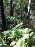 Van de de Bladerenboom van het varensgras het bosbos van de hemeltakken blauwe stock foto