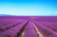Van de bloem de bloeiende gebieden van de lavendel eindeloze rijen. Valensole de Provence Royalty-vrije Stock Foto