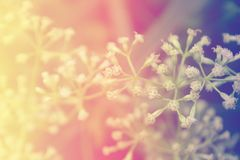 Van de de bloembloesem van het pastelkleurgras achtergrond van de de lenteaard de abstracte stock afbeeldingen