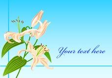 Van de bloemgreatings van de lelie de kaartvector Royalty-vrije Stock Fotografie