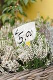 Van de bloemist Stock Foto