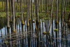 van de boomboomstam geweven patroon als achtergrond in watervijver Royalty-vrije Stock Afbeeldingen