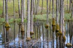 van de boomboomstam geweven patroon als achtergrond in watervijver Stock Foto's
