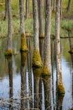 van de boomboomstam geweven patroon als achtergrond in watervijver Royalty-vrije Stock Foto's