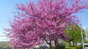 Van de boominstallaties en bloemen van Spanje tuin Royalty-vrije Stock Foto