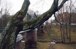 van de de boomstambrug van de boomtak van de de stadsdag de architectuur van de de hemelrivier in openlucht Stock Afbeeldingen