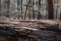 Van de de Boomstomp van Forest Decay Outlook Solitude Alone de Eenzame Gevallen Natuurlijke Achtergrond royalty-vrije stock fotografie