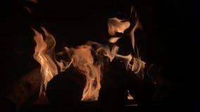 Van de de brandzomer van het kampvuurkamp de nacht brandend brand/kampvuur stock footage