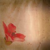 Van de ceiba rode bloem van Bombax oude grunge royalty-vrije stock foto