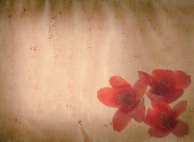 Van de ceiba rode bloem van Bombax oude grunge stock foto's