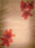 Van de ceiba rode bloem van Bombax oude grunge royalty-vrije stock foto's