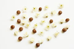 Van de chocoladegraangewas en kers bloemen Royalty-vrije Stock Foto's