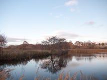 Van de de dagboom van de meer het koude herfst oppervlaktewater van de de takkenbezinning naakte Stock Foto