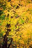 Van de dalingsbomen van de herfstbladeren de aardachtergrond Stock Afbeelding