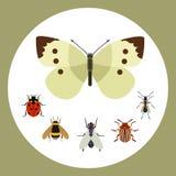 Van de de aard vliegende vlinder van het insectpictogram vlakke de kevermier en van de het wildspin sprinkhaan of mugkakkerlak Stock Foto's