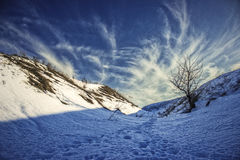 Van de de bergboom van de de wintersneeuw van de de hemel blauw ochtend de vorst hoog landschap Royalty-vrije Stock Foto's