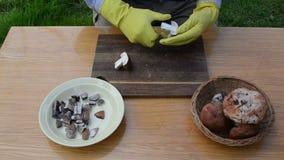 Van de de besnoeiingsplak van mensenhanden van de het eekhoorntjesbroodboleet van het de paddestoelmes de houten lijst stock video