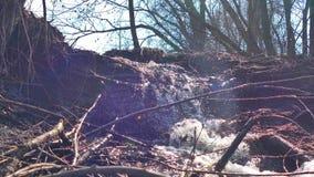 Van de de bomenwaterval van de stroom de bosrivier droge video van het de motielandschap stock footage