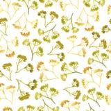 Van de de dillebloem van de waterverfbloemkroon het naadloze patroon Stock Foto's