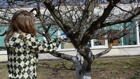 Van de de handbesnoeiing van de tuinmanvrouw van het de gedroogde pruimfruit van de de boomtak de de handzaaglente stock videobeelden