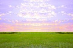Van de de hemelwolk van het padieveld groene gras bewolkte het landschapsachtergrond Stock Afbeeldingen
