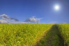 Van de de hemelwolk van het padieveld het groene gras blauwe bewolkte landschap backgroun Stock Foto's
