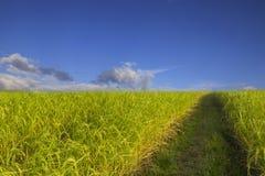 Van de de hemelwolk van het padieveld het groene gras blauwe bewolkte landschap backgroun Royalty-vrije Stock Afbeeldingen