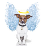 Van de de hondveer van de engel de vleugelsaura Royalty-vrije Stock Foto's