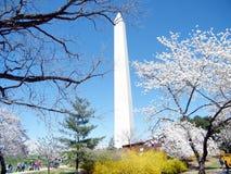Van de de kersenbloesem van Washington de boom en Monument Maart 2010 Stock Foto's