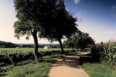 Van de de maïspartij van wijngaarden de vallei Frankrijk Stock Foto