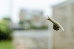 Van de de Onderkantmening van de tuinslak van het het Glasvenster Plaats de In de voorsteden Stock Fotografie
