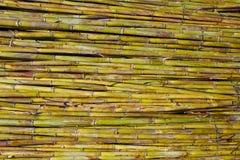 Van de de oogsttextuur van het rivier groene riet het patroonachtergrond Stock Foto's