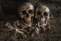 Van de de schedelkunst van het stillevenpaar de menselijke abstracte achtergrond Stock Foto's