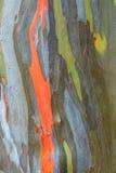 De schorstextuur van de eucalyptus Royalty-vrije Stock Foto's