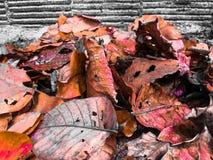 Van de de vakantietijd van de Foliageszomer de reis Thailand Royalty-vrije Stock Afbeelding